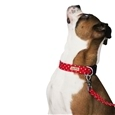Matching Dog Collar & Lead Set_HD1163_2