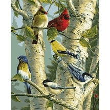 Song Birds Paint-By-Number Art Kit