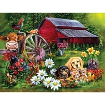 Sweet Country 500 pc