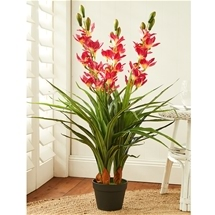 Artificial Cymbidium Pot