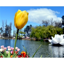 Floriade 2019 Tour in Canberra (3 Days)