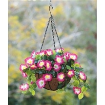 Morning Glory Hanging Basket