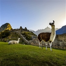 Incredible Tour of Peru (10 Day)