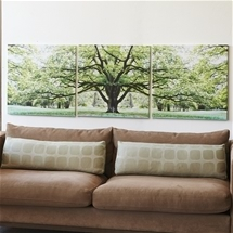 Savannah Oak Tree Triptychs Canvas Prints