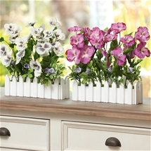 Pansy Windowsill Box