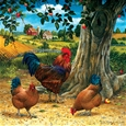 Rooster and Hen_47531_0