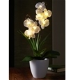 Glowing Orchid_OCDCR_0