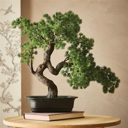 Potted Bonsai Tree Innovations